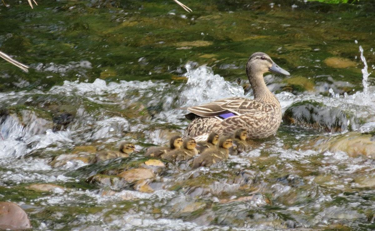 Bird Walk Photography walk